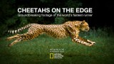 How to Photograph a Cheetah at Full Speed