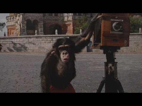 Photos Taken by Chimp Fetch Over $75,000