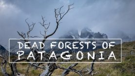 Photographing the Dead Forests of Patagonia