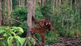 Borneo – Behind the Scenes