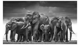 David Yarrow Reveals his Photography Secrets
